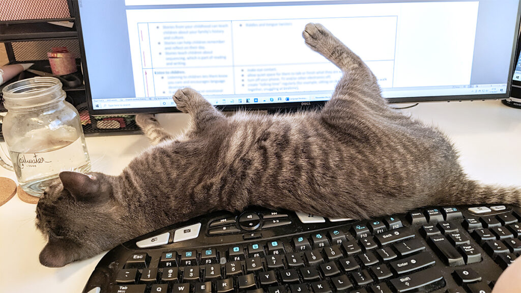 Gemma the rescue kitty is stretched out in front of the author's computer screen