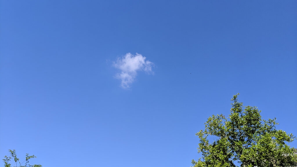 A small single cloud in a big blue sky with tree tops in the foreground
